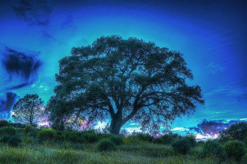 tree  light  lighting