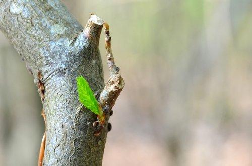 tree  bud  nature