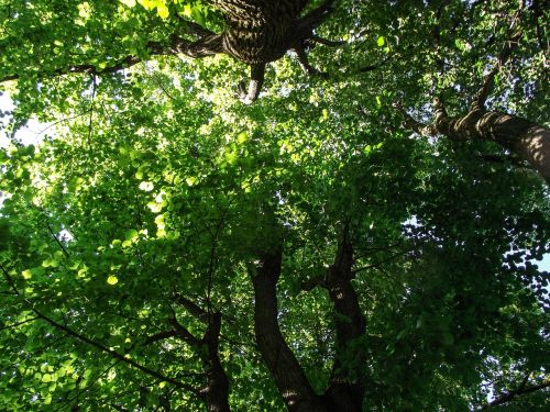 tree,green,branch,aesthetic,leaf,leaves,color,shades of green,green green,canopy,foliage,plant,yellow green