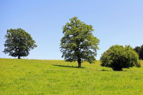 tree trees individually