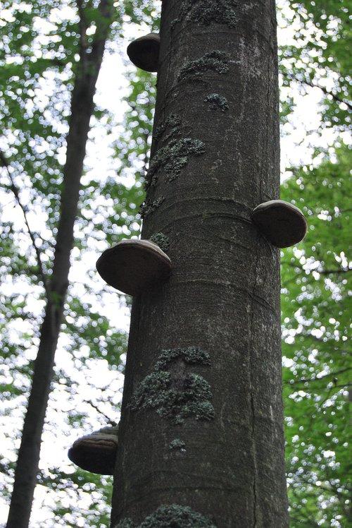 tree  forest  hub