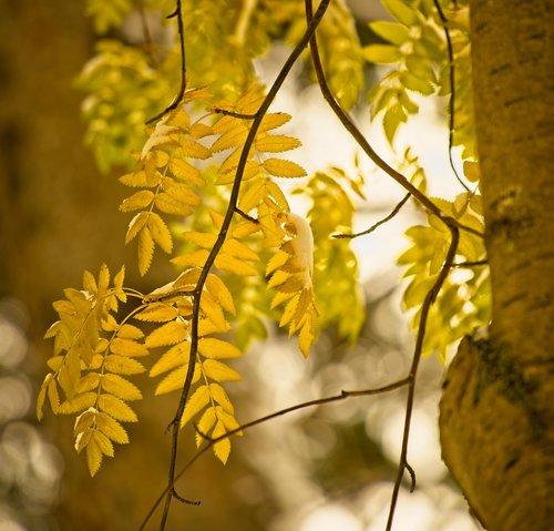 tree  leaves  autumn