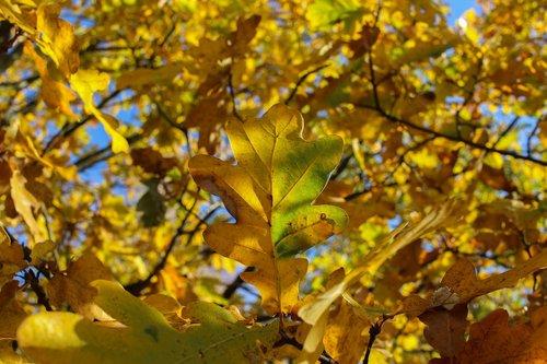 tree  leaf  yellow