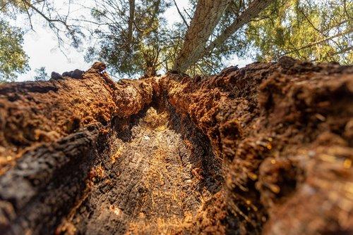 tree  sap  core