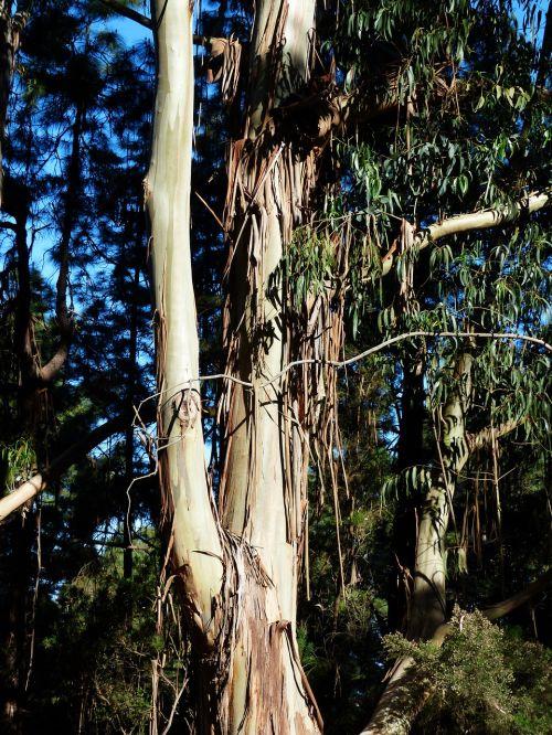 tree bark peeled off