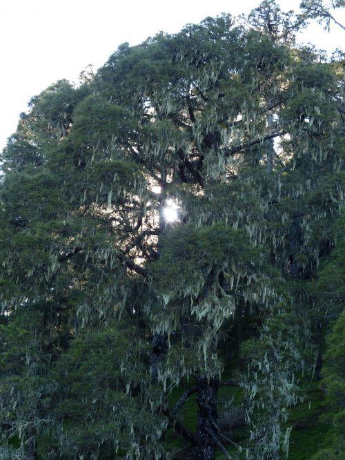 tree bemoost weave
