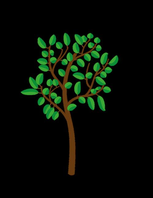 tree  bush  plant