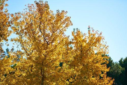 tree  plant  leaves