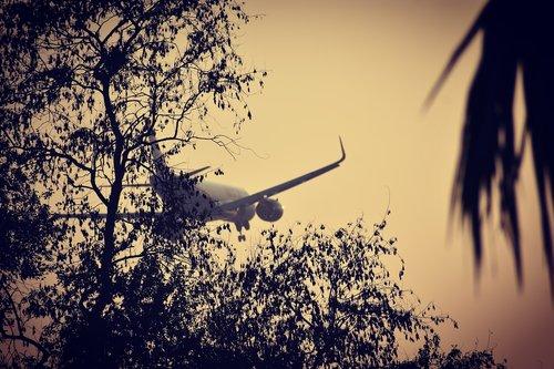tree  aeroplane  sky