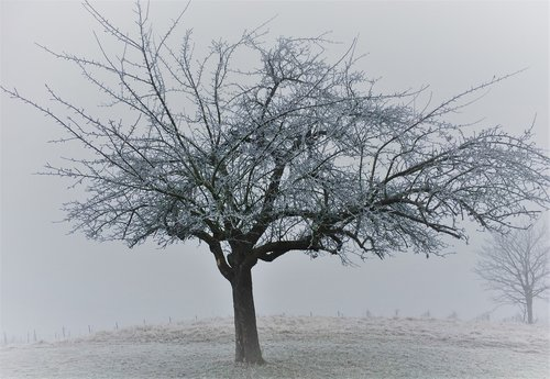 tree  winter  landscape