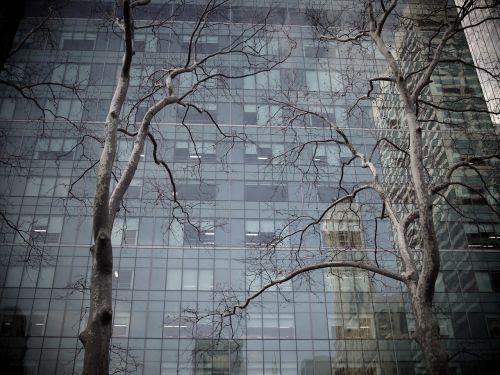 tree building skyscraper