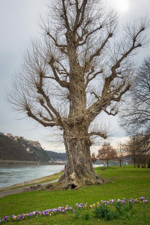 tree  park  rhine