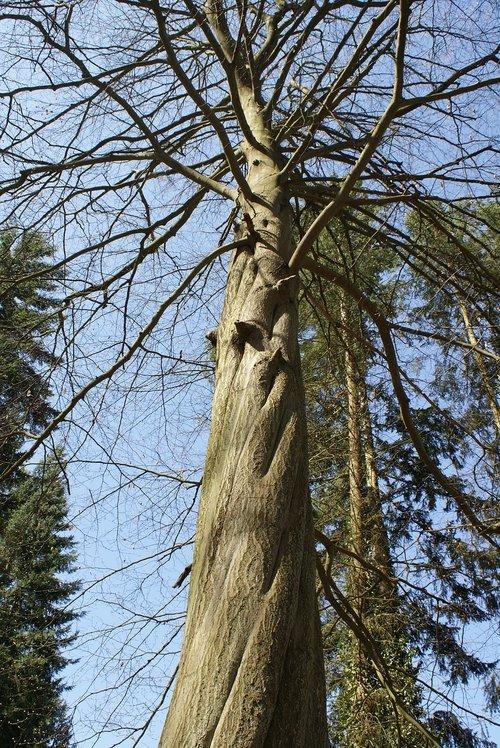 tree  nature  arboretum