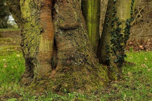 tree  log  tree root