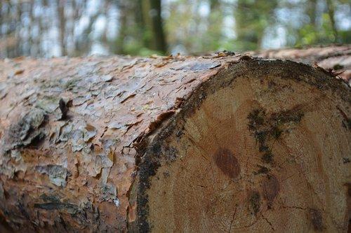 tree  log  green