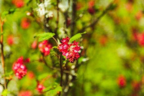 tree  bush  red