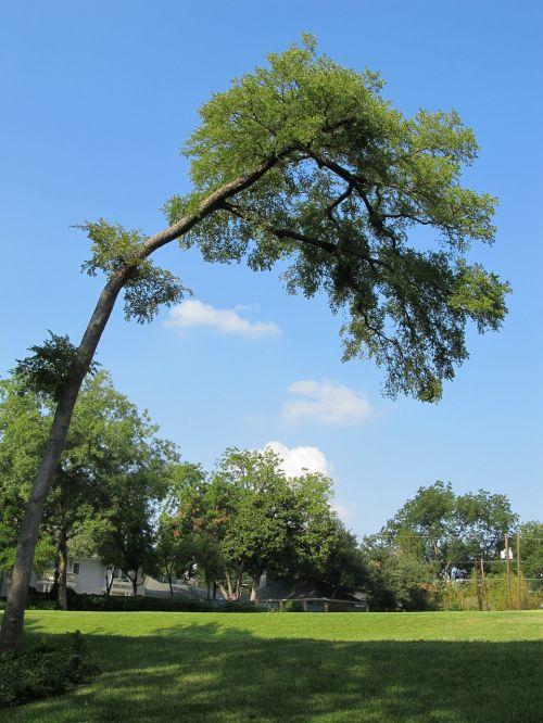 tree bent tree bent