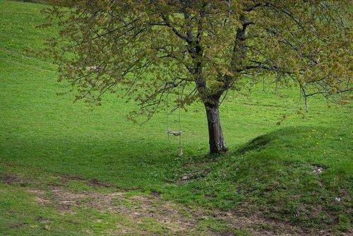 tree  meadow  swing