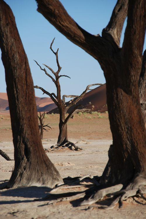 tree forest desert