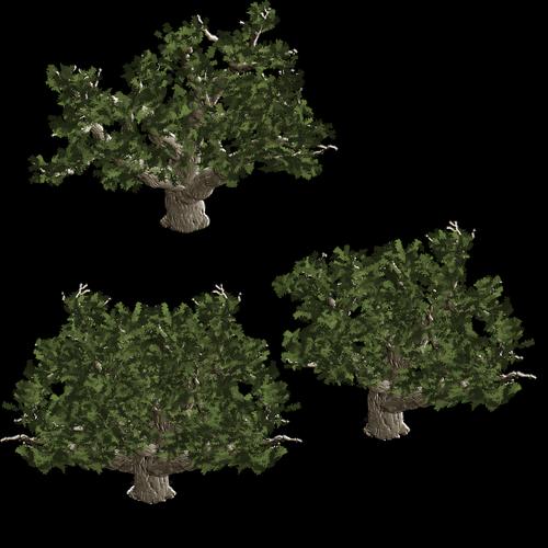 tree  baum  trees