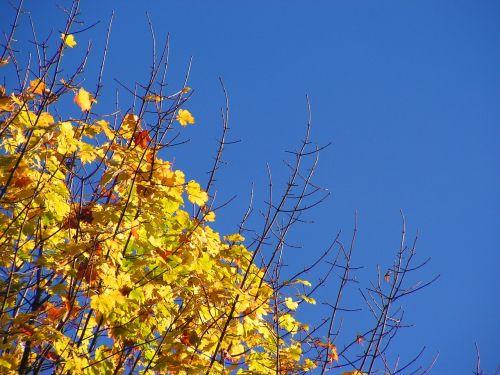 medis,ruduo,spalvos,lapai,gamta,filialas,medžių šakos,lapai