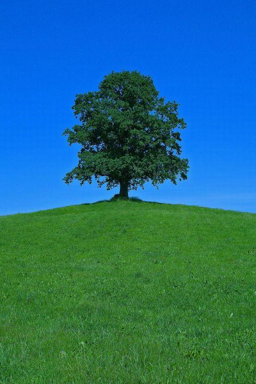 tree hill landscape