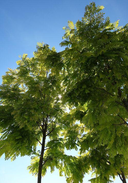 tree green blue sky
