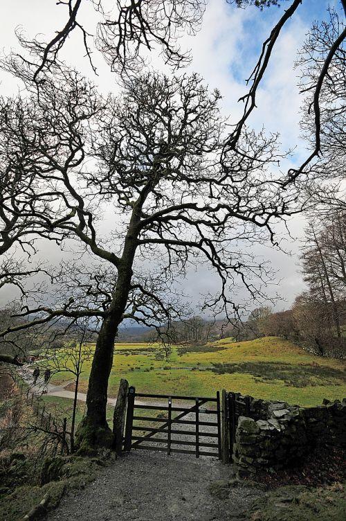 tree gate rural
