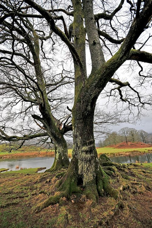 tree cumbria water
