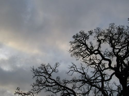 tree branch outdoor