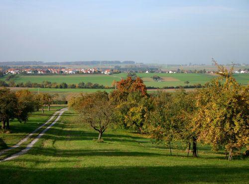 medis,vaisių sodas,išsklaidyti vaismedžiai,gamta,kraštovaizdis,dangus,pieva,ruduo,kaimas,perspektyva,vieta,namai,priemiesčiai,miesto kraštas,rudens nuotaika,spalvinga,toli,pietų Vokietijos,baden württemberg,derlius,vaisių rinkimas,vaismedžių pieva,vaisių medžiai