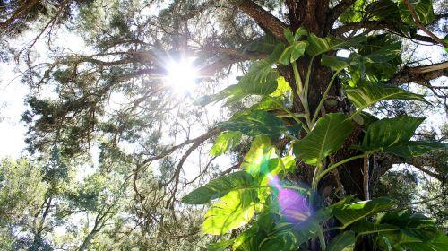 tree lens flare flare