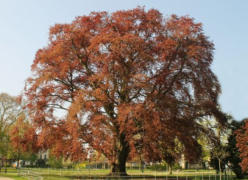 tree brown nature