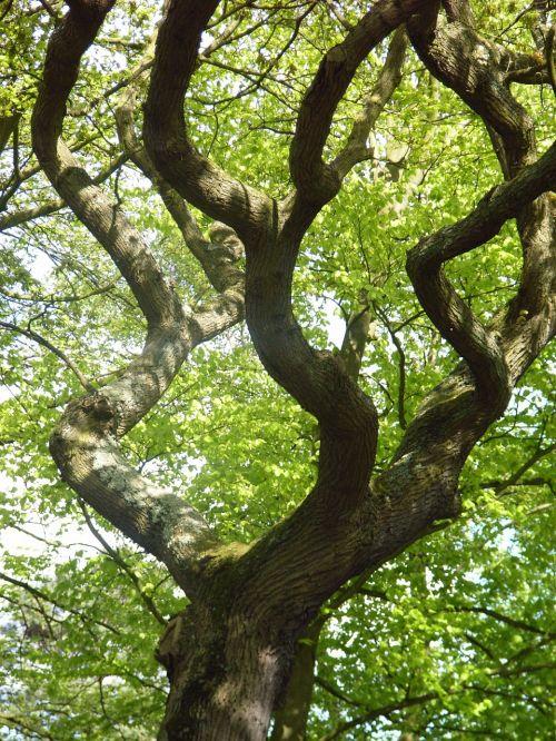 tree winding green