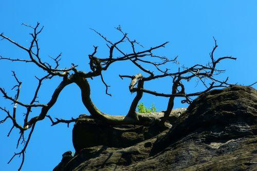 tree the dryer rock