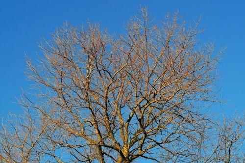 tree aesthetic kahl
