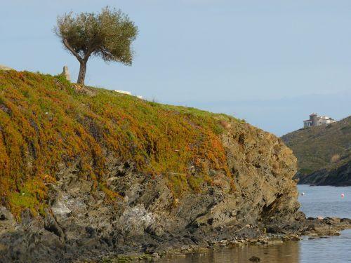 tree booked sea
