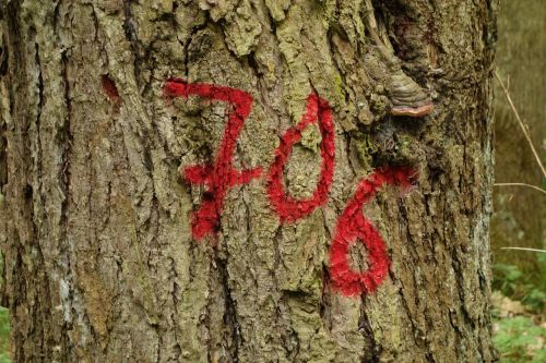 tree tagged forest