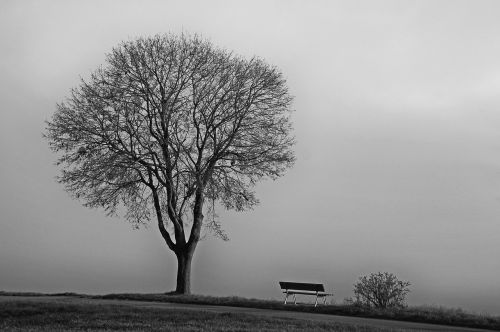 tree fog november