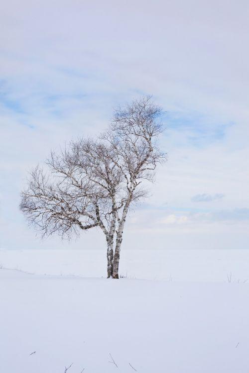 tree winter lone