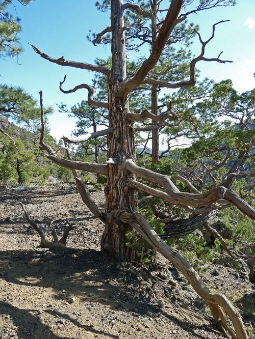 tree dead dry