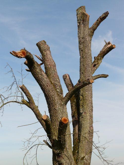 tree dying tree tree stump