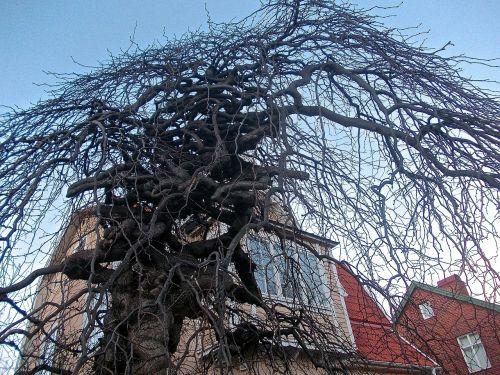 tree medusa facade
