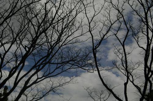 tree gloomy mood