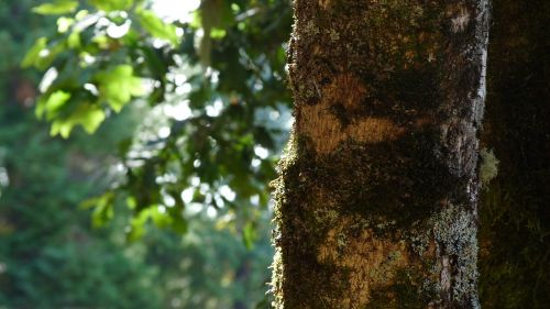 tree framework leaves