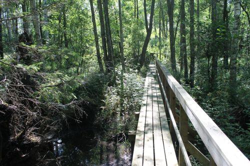 tree forest footbridge