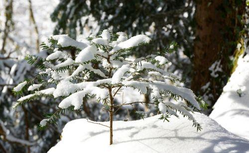 tree plant winter