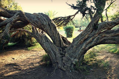 medis,žievė,bagažinė,mediena