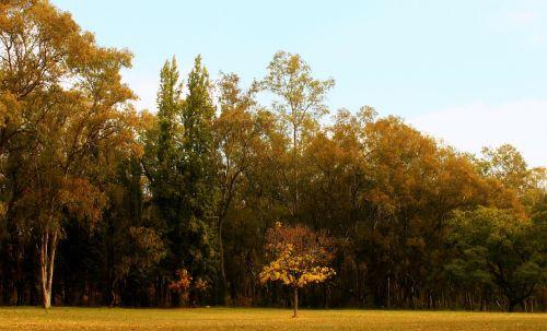 tree autumn park