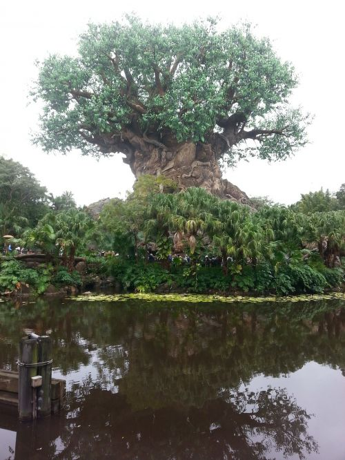 tree tree of life disney